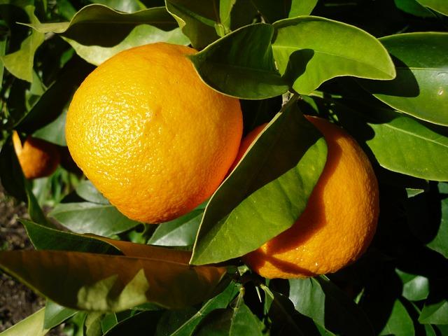 keserű narancs